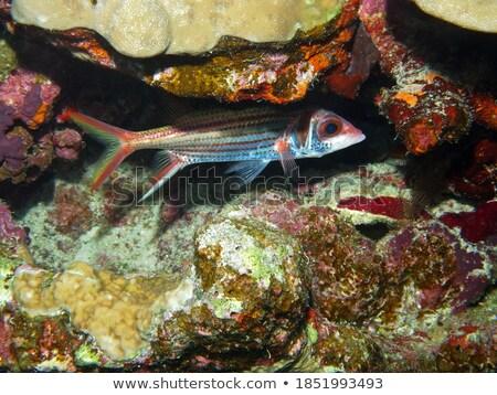 スイミング · 魚 · 海 · 美 · オレンジ · 海 - ストックフォト © Laracca