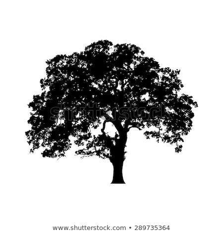 dąb · sylwetka · czarno · białe · tekstury · drzewo - zdjęcia stock © smithore