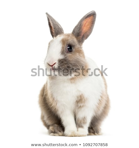 rabbit sitting on a grey background stock photo © feedough