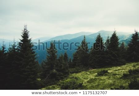 Natureza paisagem hdr imagem vários tiro Foto stock © vlad_star