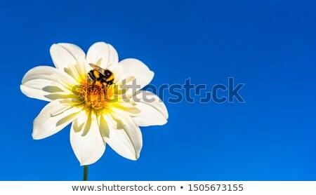 verzamelen · honing · bee · roze · bloem · schoonheid - stockfoto © victor1978