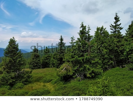 forest, Czech Republic Stock photo © phbcz