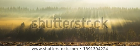 Stock photo: Tree Line Hazy Sun