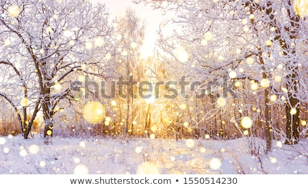 Hiver sunrise neige couvert arbre Photo stock © rogerashford