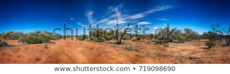 australian desert  Stock photo © clearviewstock
