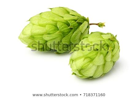 Verde hop colorato illustrazione vettore Foto d'archivio © derocz