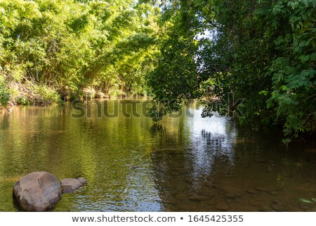 nature around a small creek in the forest woods stock photo © alex_grichenko
