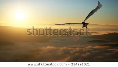 flying eagle stock photo © listvan