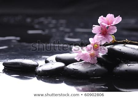 spa · pierres · cerisiers · en · fleurs · vecteur · résumé · nature - photo stock © Alessandra