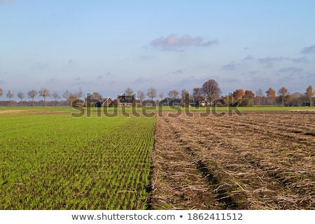 Harvested potato field with rotovated earth Stock photo © juniart