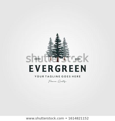 Drie pine geïsoleerd witte bos natuur Stockfoto © Rob_Stark