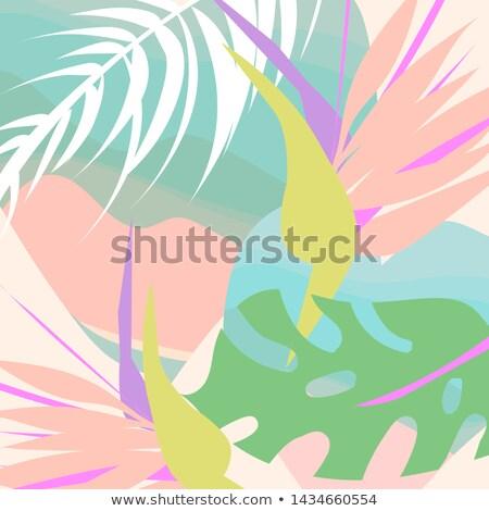 meghívó · trópusi · kép · illusztráció · virágok · madár - stock fotó © irisangel