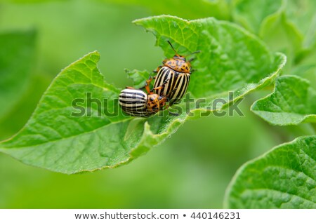 jardin · escargot · naturelles · habitat - photo stock © lightsource