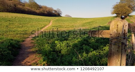 Public footpath sign points into a field with trees Stock photo © sarahdoow