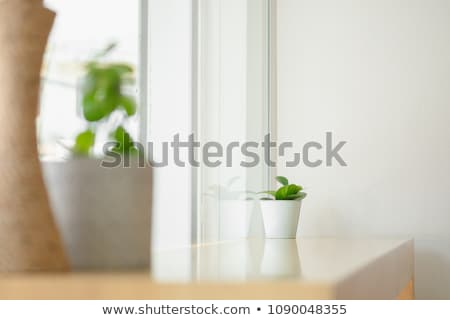 little green plant decorated on wooden table stock photo © nalinratphi