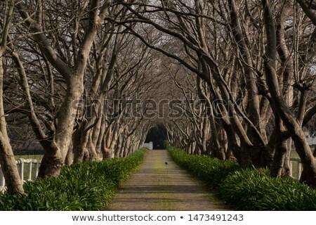 вниз · парка · сторона · один · известный - Сток-фото © rmbarricarte