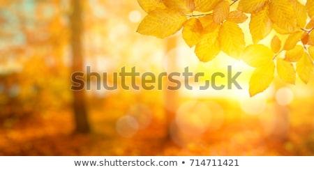 природного осень желтый листьев зеленая трава Сток-фото © AlisLuch