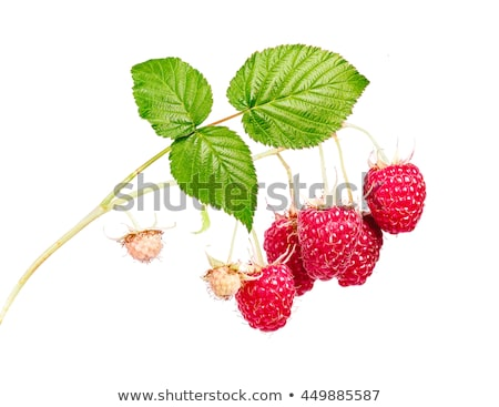 perfect ripe raspberries stock photo © zhekos