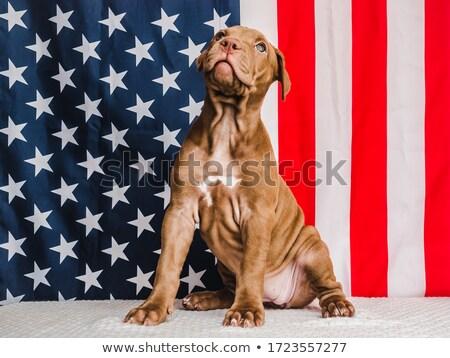 American flag, little card Stock photo © zurijeta