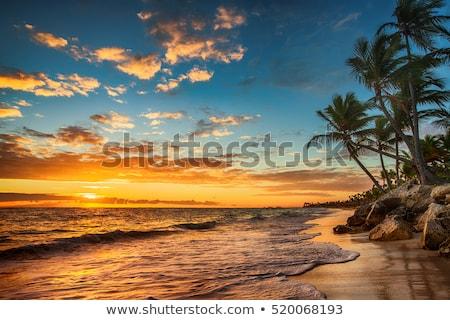 Trópusi tengerpart naplemente tengerpart tenger óceán sziluett Stock fotó © pancaketom
