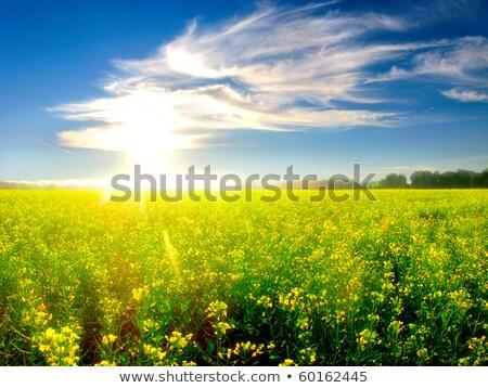 Verão paisagem espaçoso campo céu nuvens Foto stock © manera