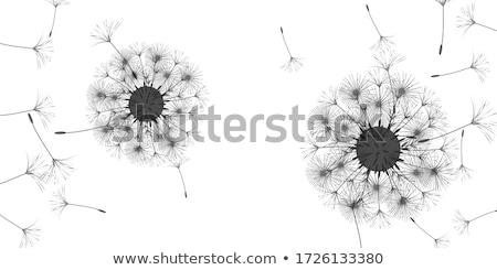 retro · tarjeta · diente · de · león · tarjeta · de · felicitación · flores · habitación - foto stock © olena