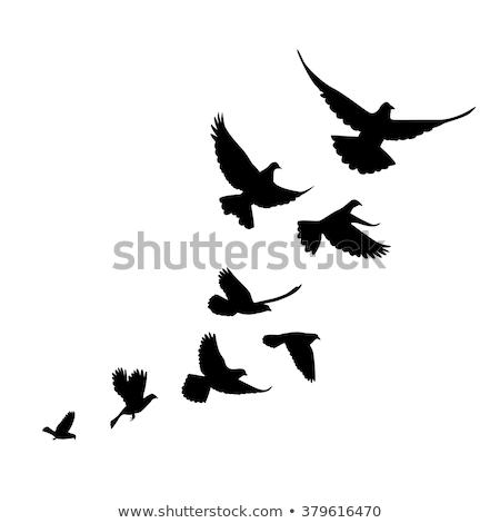 Stock photo: Set bird pigeon flies. Black silhouettes