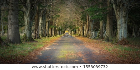 magic tunnel and pathway through a thick forest with sunlight t stock photo © leonidtit