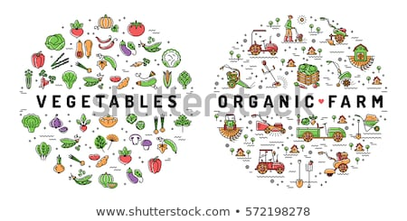 Infographic design with food and organic farm Stock photo © bluering