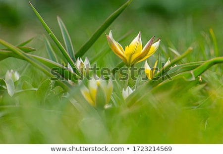 Close up of yellow flower Stock photo © IS2