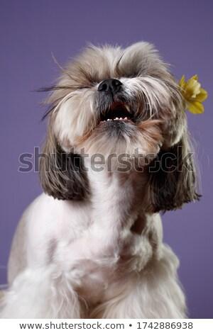 Zangado abrótea desenho animado ilustração olhando flor Foto stock © cthoman