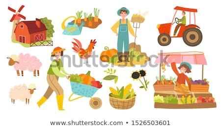 harvest farmer vegetables set vector illustration stock photo © robuart