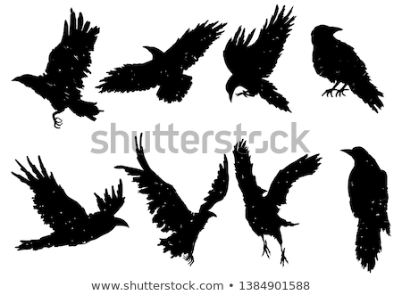 Animal outline for crow Stock photo © colematt