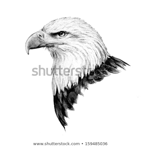 bald eagle icon isolated on white background predatory bird stock photo © marysan