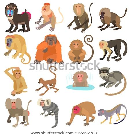 Foto d'archivio: Diverso · scimmie · eps · 10 · design · divertimento