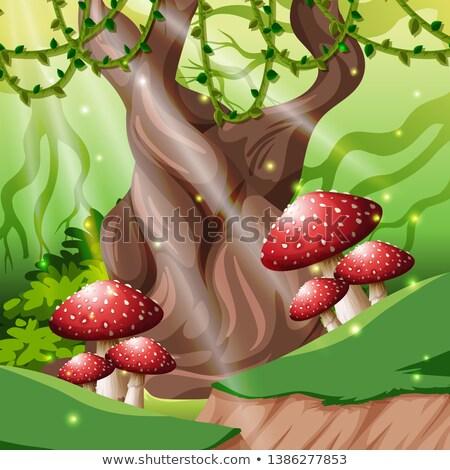 Tropikalnych Rainforest lasu charakter projektu lata Zdjęcia stock © bluering