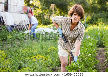 Harvesting Season, Man and Woman Working on Field Stock photo © robuart