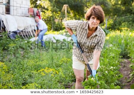 vrouw · organisch · landbouwer · boerderij · produceren · oogst - stockfoto © robuart