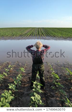 Agricultural scene, farmer in corn field after flood Stock photo © simazoran