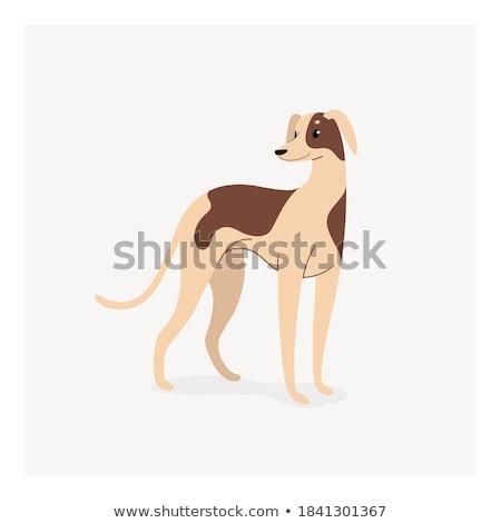 geometric shapes with funny dogs characters set Stock photo © izakowski