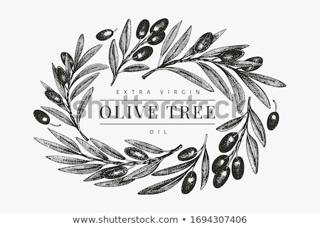 Foto d'archivio: Agricultural Fresh Olive Tree Branch Banner Vector