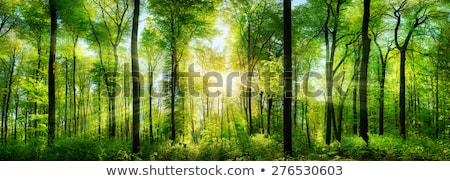 Tájkép zöld fák felhők mező égbolt Stock fotó © WaD