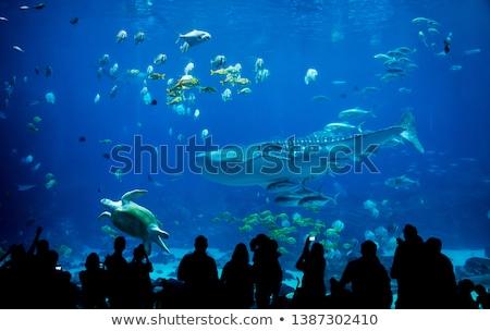bezoekers · aquarium · illustratie · meisje · vis · glas - stockfoto © alexeys
