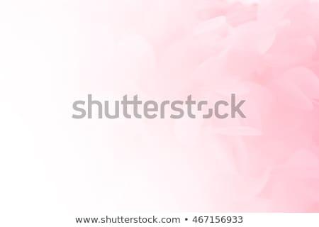 Zachte roze roze bloem bloemblaadjes bloem hart Stockfoto © Melpomene