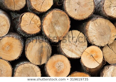 Pine firewood burning at fireplace stock photo © Olesha
