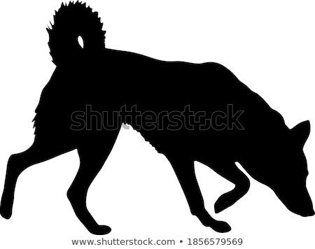 hunters silhouettes stock photo © bokica
