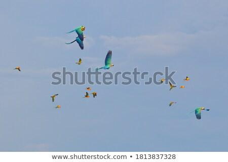 funny · papuga · zdobycz · odizolowany · biały - zdjęcia stock © RAStudio