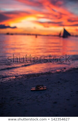 Close-up of shale at sunset in Boracay island on Philippines Stock photo © travnikovstudio