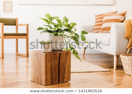 Close-up of a potted plant Stock photo © zzve