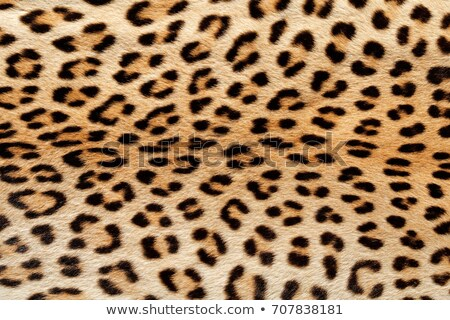 texture of leopard pelt Stock photo © taviphoto
